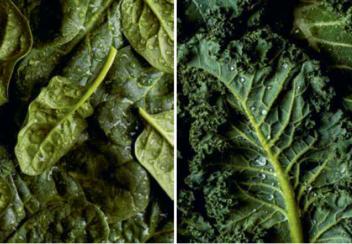 Kevadine toitumine: roheline energia