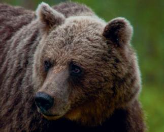 Kohtudes karude ja kuklasehirmuga